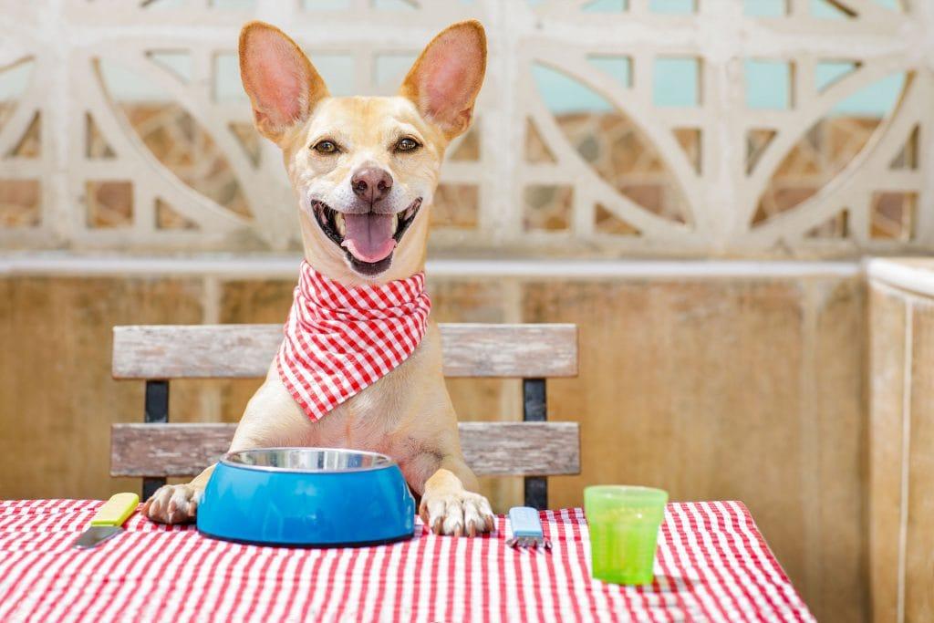 40 Pet-Friendly Restaurants in Scottsdale, AZ